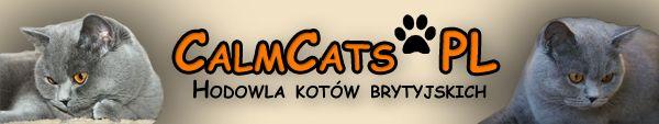 CalmCats