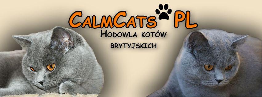 Hodowla Calm Cats*PL